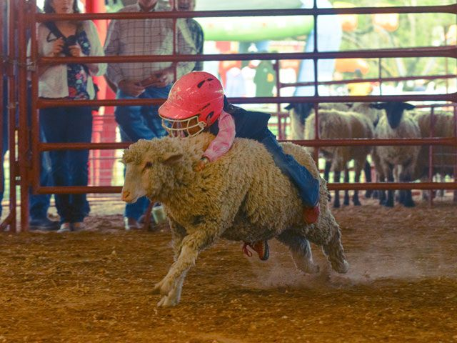 Walker County Fair Amp Rodeo Hours And Ticket Prices Tour