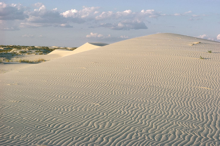 The rolling dunes at Monahans Sandhills State Park provide a view unlike any other in Texas.