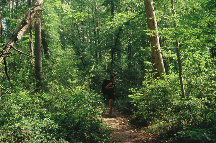 Explore the Lone Star Hiking Trail, Texas' longest hiking trail that is located in the Sam Houston National Forest.