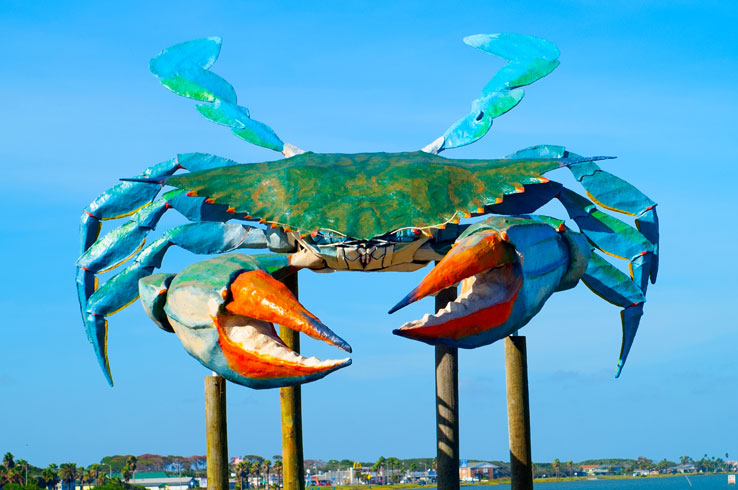 Visit Rockport Beach and you'll encounter Big Blue Crab.