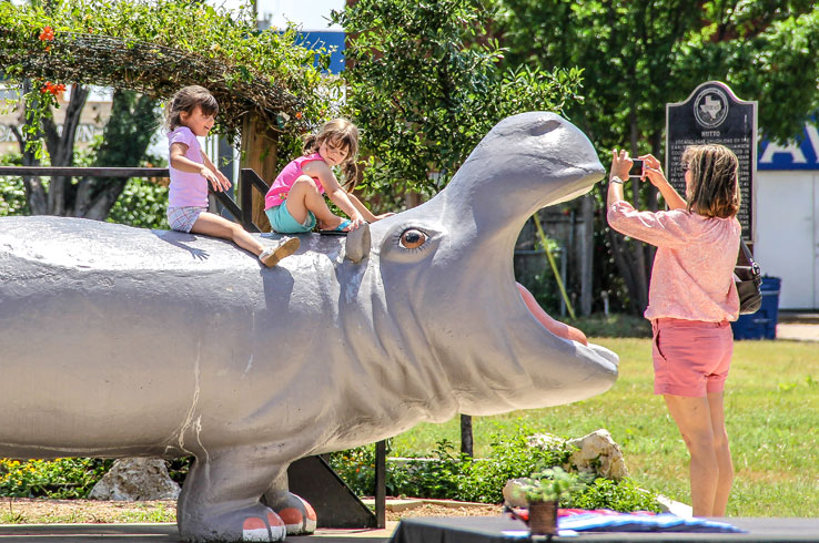 Henrietta is just one of many hippos in Hutto, the Hippo Capital of Texas.