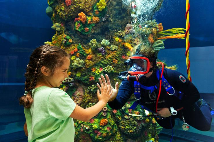 New at the Aquarium Pyramid is diver presentations.