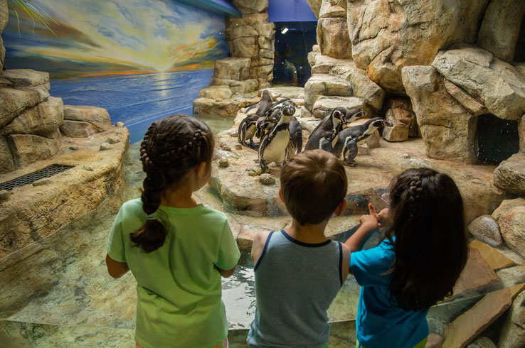 The Aquarium Pyramid's newest residents are the Humboldt Penguins,.