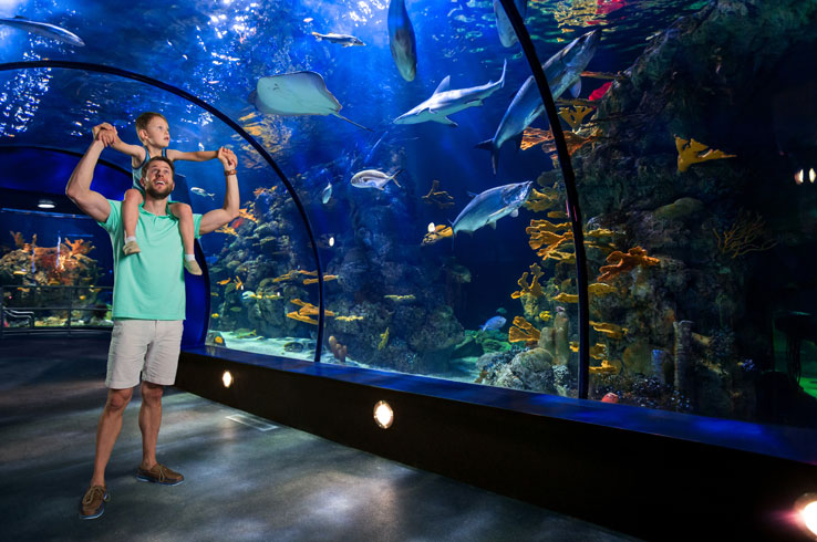 With brand new and expanded exhibits created throughout the $37 million overhaul, the Aquarium Pyramid takes you on an immersive adventure through the world's oceans.