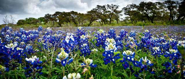 Bluebonnet New Braunfels >> New Braunfels Tour Texas