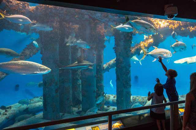 Texas State Aquarium Hours And Ticket Prices Tour Texas
